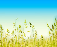 Grass and perfect blue sky Stock Photography