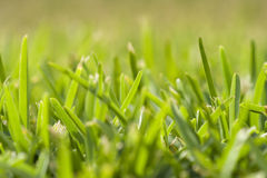 Grass perspective (soft focus) Royalty Free Stock Photography