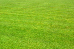 Grass - perspective - 9698 Royalty Free Stock Image