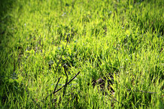 Grass. Photo of fresh green grass at the spring Stock Images