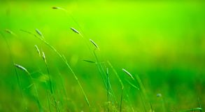 Grass pile on the smooth blurred green background Royalty Free Stock Images