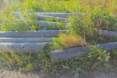 Among the grass piled up logs without bark Royalty Free Stock Image