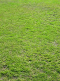Grass pitch texture. Portrait image of a sports field grass pitch royalty free stock photos