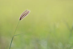 Grass with plain background Stock Image