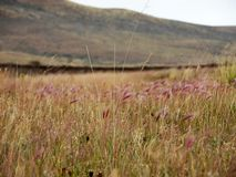 Grass Plains in the Patagonia royalty free stock photography