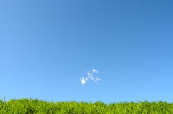 Grass - Planet Earth - grass with blue sky Stock Image