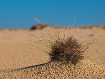 Grass plant Stock Photography