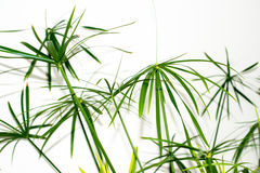 Grass plant leaves background Stock Photography