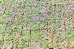 Grass planted on the slope for rain containment. Maua, SP, Brazil - November 11, 2015 stock photos