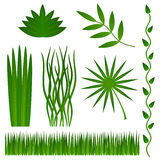 Grass and plants. A set of green grass and plants on a white background