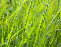 Grass, plants. Close-up on a sunny day. Flora. season Stock Image