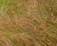 Grass, plants Royalty Free Stock Images