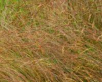 Grass, plants. Fragment grass plants outdoors. Flora. Summer season Royalty Free Stock Images
