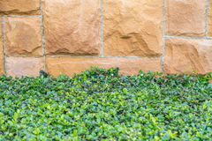 Grass, plants leafs and gravel concrete background. Royalty Free Stock Photography