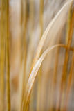 Grass and plants in soft focus Royalty Free Stock Photo