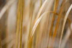 Grass and plants in soft focus Royalty Free Stock Photography