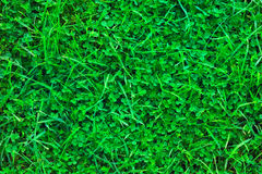 Grass-Plot Royalty Free Stock Image