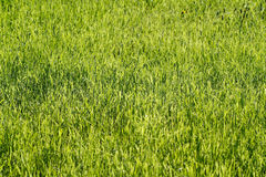 Grass-plot Stock Images