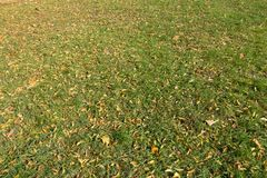 Grass plot covered with fallen leaves. Grass plot covered with dry fallen leaves Stock Photos