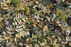 Grassplot covered with lots of fallen leaves. Grass plot covered with lots of fallen leaves royalty free stock image