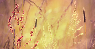 Grass and pollen Stock Photography