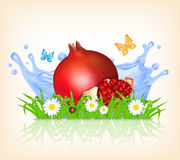 Grass and pomegranate. On a background of splashing water. Summer time. Time for a picnic. Vector background. EPS10 vector Stock Photography