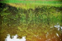 Grass pond Stock Image