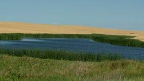 Grass Pond stock footage