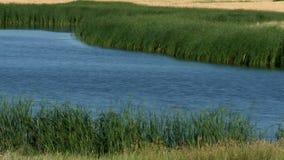 Grass Pond stock video footage