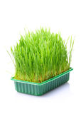 Grass in pot Stock Photos