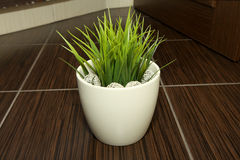 Grass in the pot. Green grass in the pot royalty free stock photo