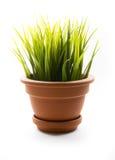 Grass in pot Stock Photos