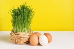 Grass pot with chicken eggs on white board and yellow background. Selective focus, toned image, film effect. Grass pot with eggs on white board and yellow stock photos