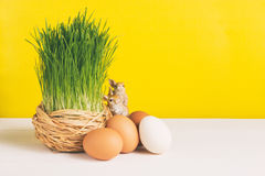 Grass pot with chicken eggs on white board and yellow background. Selective focus, toned image, film effect. Grass pot with eggs, rabbits on white board and Stock Photos