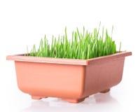 Grass pot Stock Image