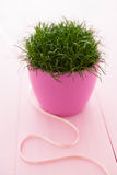 Grass in pot Stock Photo