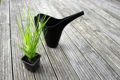 Grass pot and watering can Stock Image