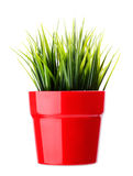 Grass in a pot Royalty Free Stock Images