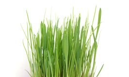 Grass in a pot on a white background stock photos
