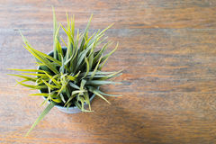 Grass in a pot Stock Photo