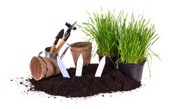 Grass in pots, ground  and garden tools Stock Image
