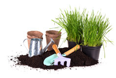 Grass in pots, ground  and  kids garden tools Stock Image