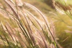 Grass prairies and sunset Stock Image