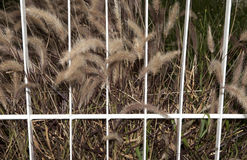 Grass Prison Royalty Free Stock Photos