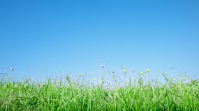 Grass profile and sky Royalty Free Stock Photos