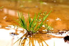 Grass in a pool Royalty Free Stock Image