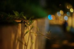 Urban roadside grass. The grass is quiet on the roadside, in sharp contrast to the colorful city lights in the distance royalty free stock photography