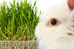 Grass and rabbit Royalty Free Stock Image