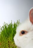 Grass and rabbit Stock Photography