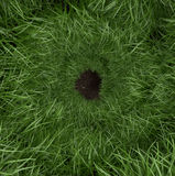 Grass rabbit hole Stock Images